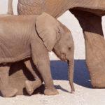 マストドンとは無関係な象のあかちゃん
