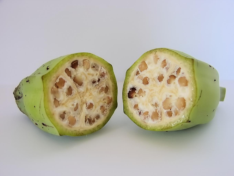 野生種のバナナ-種あり